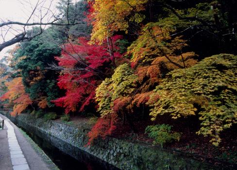 秋+京都「Tetsugaku-no-michi and Autumn Leaves, Kyoto, Kyoto, Japan」:スマホ壁紙(14)