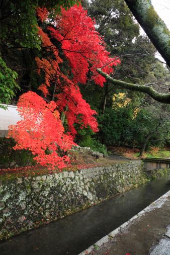 秋+京都「Tetsugaku-no-michi and Red Leaves, Kyoto, Kyoto, Japan」:スマホ壁紙(13)