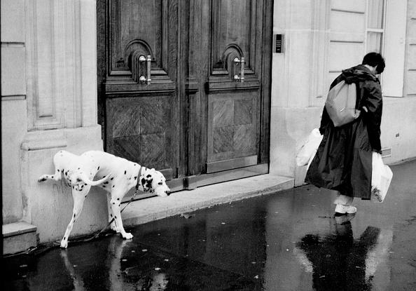 City Life「A Dog, Man's Best Friend」:写真・画像(15)[壁紙.com]