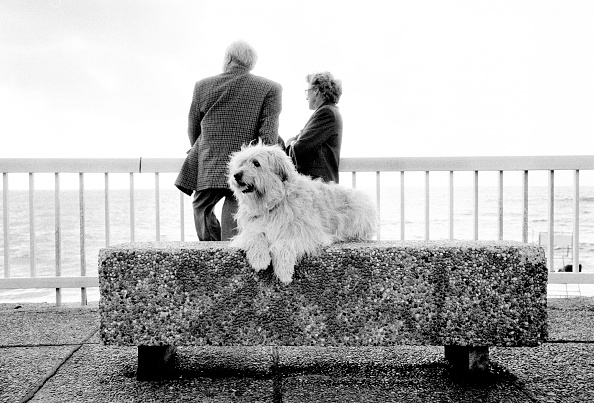 Senior Couple「A Dog, Man's Best Friend」:写真・画像(7)[壁紙.com]