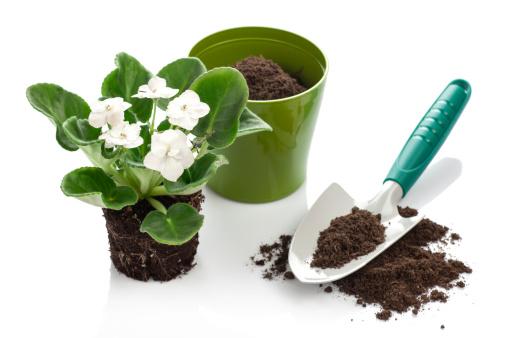 Flower Pot「Trowel and Flower Growing」:スマホ壁紙(15)
