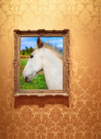 Horse「framed photograph of white horse.」:スマホ壁紙(4)
