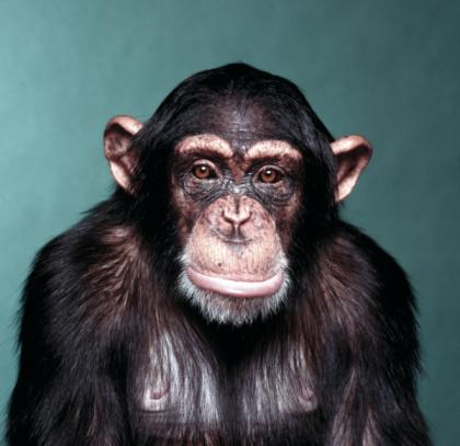 Monkey「Sad Monkey」:スマホ壁紙(12)