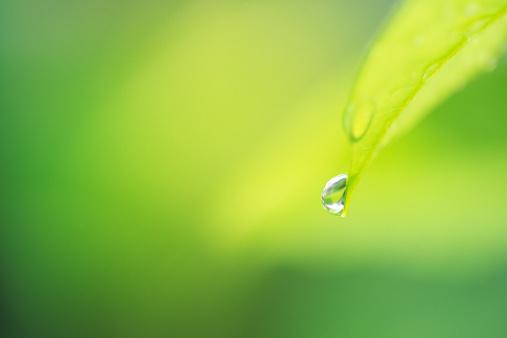 Droplet「リーフ、滴」:スマホ壁紙(14)