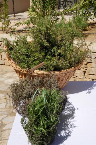 Tarragon「aromatic herbs, tarragon, chives ... , Provence, S」:スマホ壁紙(10)