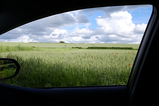 flower「View of wheat field with poppies through a car window, Niort, France」:スマホ壁紙(15)