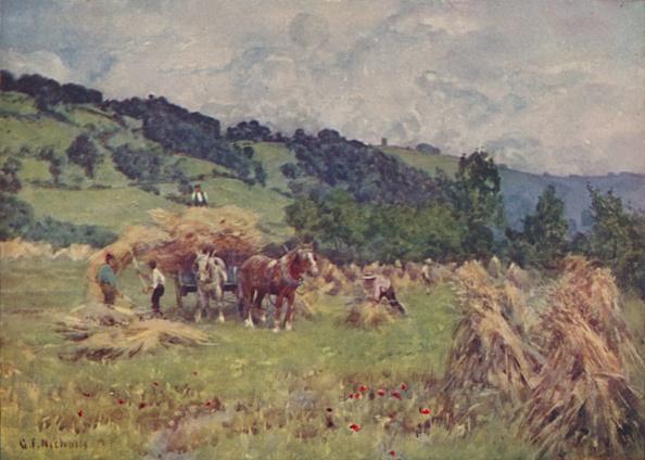 Grass Family「A Cornfield」:写真・画像(16)[壁紙.com]