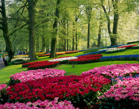 Keukenhof Gardens「Keukenhof, also known as the Garden of Europe, Holland, the Netherlands」:スマホ壁紙(16)