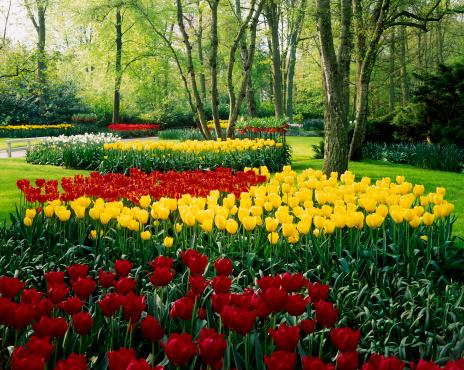 Keukenhof Gardens「Keukenhof, also known as the Garden of Europe, Holland, the Netherlands」:スマホ壁紙(3)