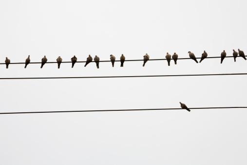 コミュニケーション「Pigeons perched on telephone wires」:スマホ壁紙(6)