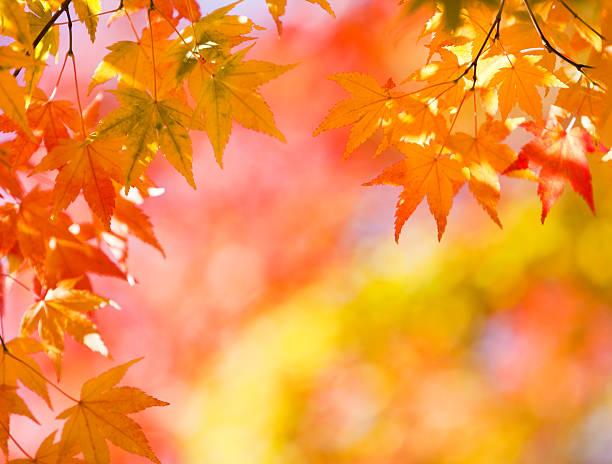 Bright Autumn Colors:スマホ壁紙(壁紙.com)