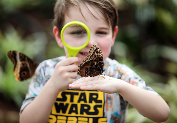 Looking「The Natural History Museum's Sensational Butterflies Exhibition Prepares To Open To The Public」:写真・画像(4)[壁紙.com]