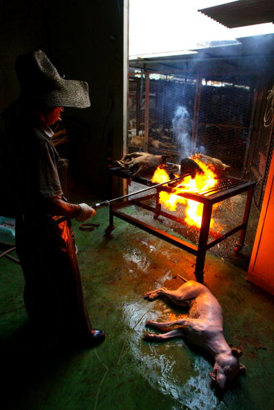 Blow Torch「Dogs Are Prepared For Food In South Korean Slaughterhouse」:写真・画像(6)[壁紙.com]