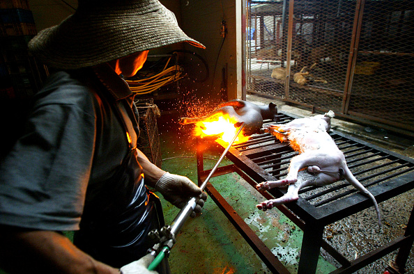 Blow Torch「Dogs Are Prepared For Food In South Korean Slaughterhouse」:写真・画像(8)[壁紙.com]
