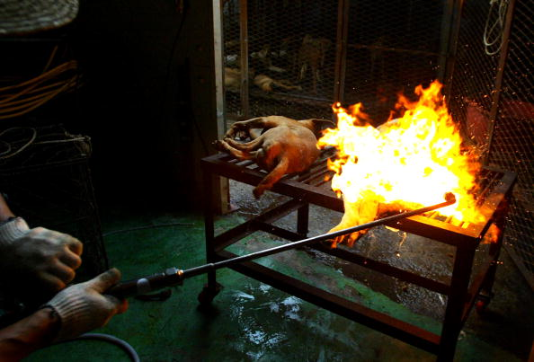 Blow Torch「Dogs Are Prepared For Food In South Korean Slaughterhouse」:写真・画像(7)[壁紙.com]
