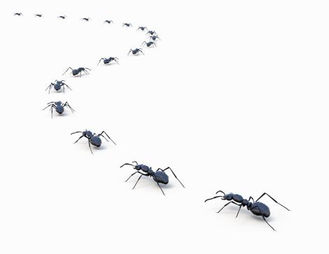 Walking「Ants marching in a line」:スマホ壁紙(9)