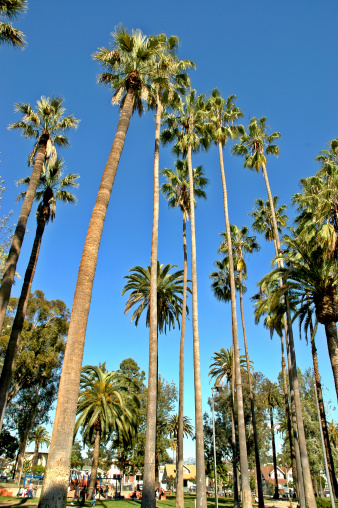 Angeles National Forest「sky high palm trees」:スマホ壁紙(15)