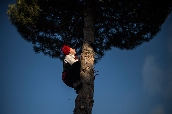 Climbing「The Pine Festival in Centelles」:写真・画像(17)[壁紙.com]