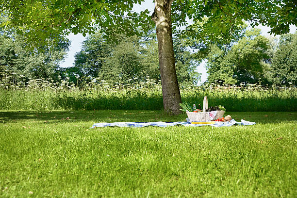 Germany, Cologne, View of picnic basket in meadow:スマホ壁紙(壁紙.com)