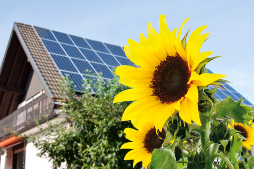 Solar Energy「Germany, Cologne, Sunflowers in front of house with solar panels」:スマホ壁紙(4)