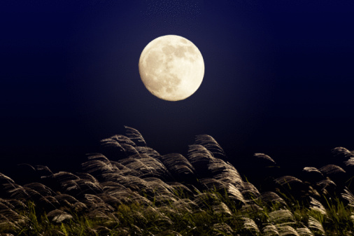 Full Moon「Full moon night with silver grasses」:スマホ壁紙(14)