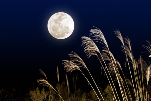 Full Moon「Full moon night with silver grasses」:スマホ壁紙(17)