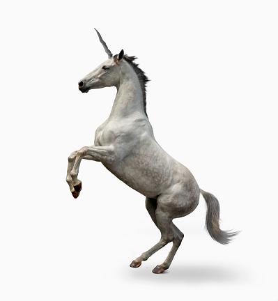 Horse「Unicorn On White」:スマホ壁紙(15)