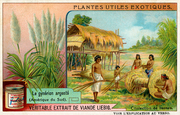 Pampas「Useful Exotic Plants:」:写真・画像(0)[壁紙.com]