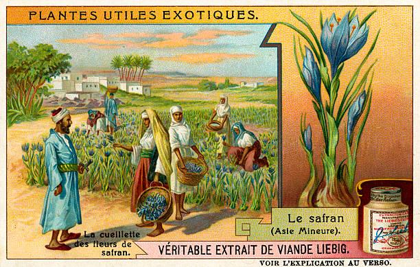 Useful Exotic Plants:  Safron:ニュース(壁紙.com)