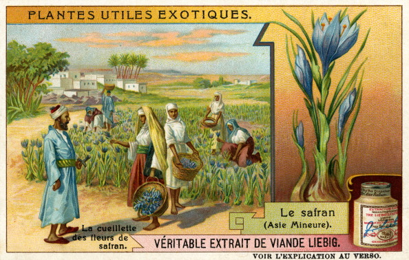 Spice「Useful Exotic Plants:  Safron」:写真・画像(15)[壁紙.com]