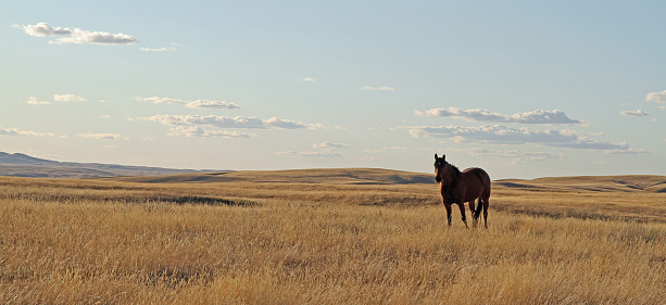 Horse「Solitary Horse in Cypress Hills」:スマホ壁紙(1)