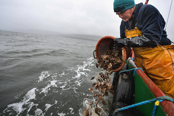 横位置「Scotland's Only Native Oyster Fisherman Lands His Catch」:写真・画像(12)[壁紙.com]