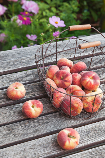 Picnic Table「Wire basket of Doughnut Peaches on garden table」:スマホ壁紙(14)