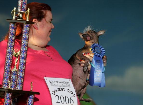 Ugliness「California Fair Crowns World's Ugliest Dog」:写真・画像(5)[壁紙.com]