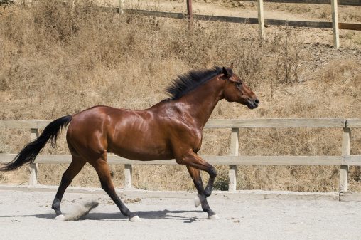 Horse「galloping horse」:スマホ壁紙(15)