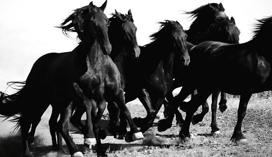 Horse「Galloping Horses」:スマホ壁紙(4)
