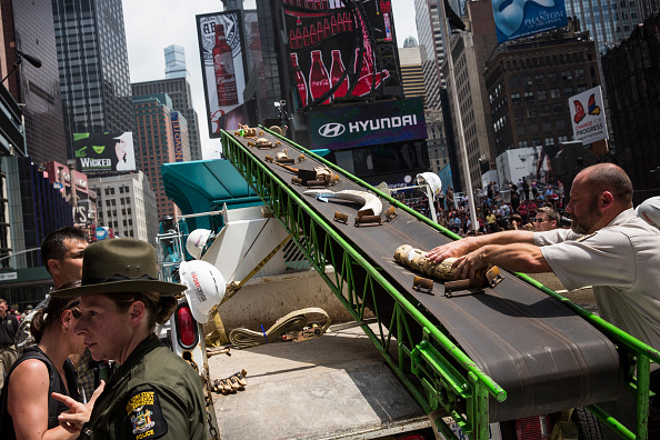 Environmental Conservation「One Ton Of Confiscated Ivory Destroyed In New York's Times Square」:写真・画像(6)[壁紙.com]