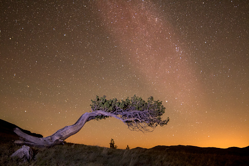star sky「Windy Ridge Bristlecone」:スマホ壁紙(12)