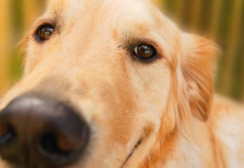 Human Nose「Dog face」:スマホ壁紙(18)