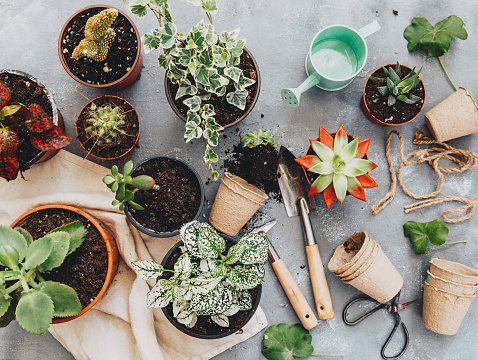 Gray Background「Cactus plant with gardening tools」:スマホ壁紙(16)