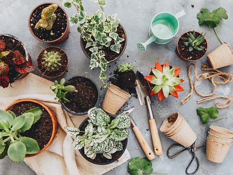 Gardening「Cactus plant with gardening tools」:スマホ壁紙(16)