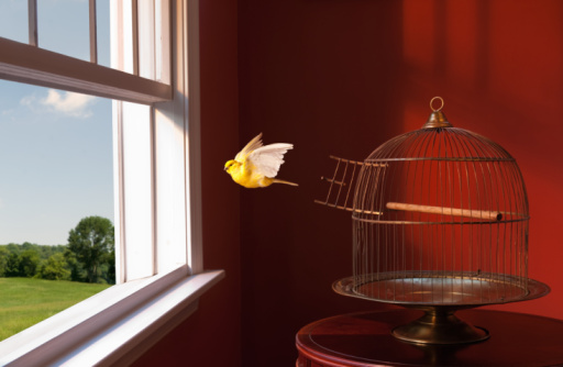 Bird「Canary escaping cage, flying toward open window」:スマホ壁紙(7)