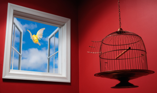 Canary「Canary escaping cage, flying out open window」:スマホ壁紙(18)