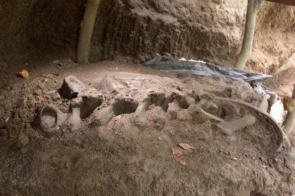 Mammal「Paleontologists Excavate Pre-Historic Salvadoran Site」:写真・画像(7)[壁紙.com]