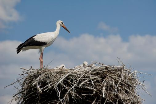鳥の巣「鳥のファミリー」:スマホ壁紙(6)