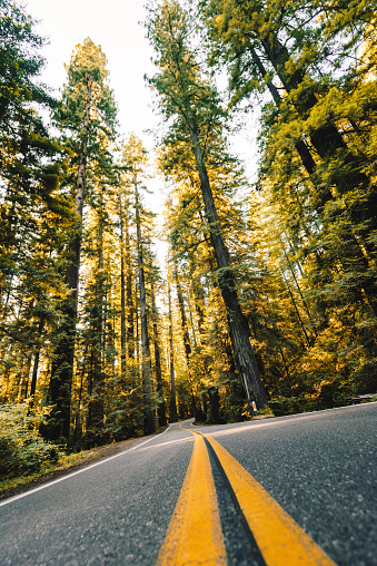 Dirt Road「on the road at the redwood national forest in california」:スマホ壁紙(19)