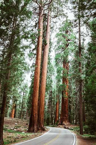 Grove「on the road at sequoia national park」:スマホ壁紙(13)