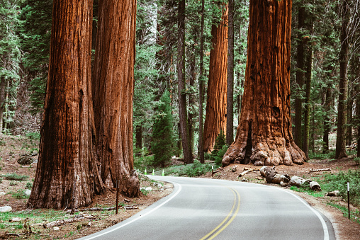 Giant - Fictional Character「on the road at sequoia national park」:スマホ壁紙(9)