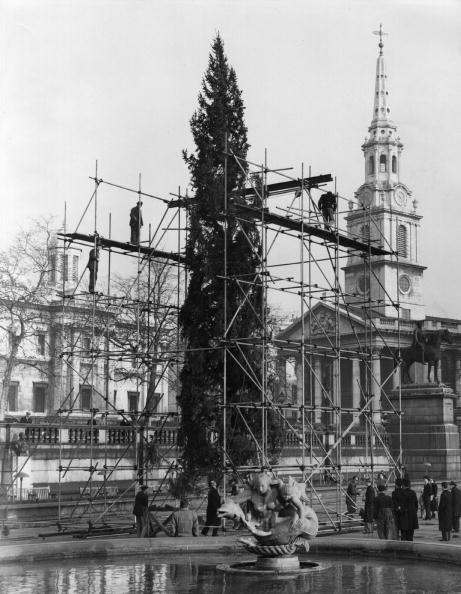Trafalgar Square「Erecting Tree」:写真・画像(17)[壁紙.com]