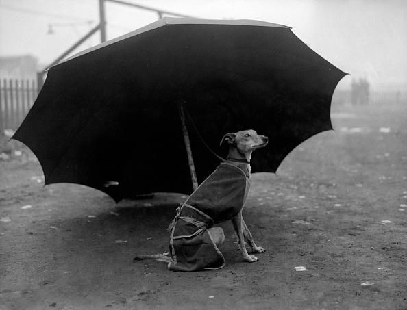 Umbrella「Under Cover」:写真・画像(12)[壁紙.com]